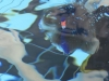 tauchertag-ferdl-cts_23-06-13_0157